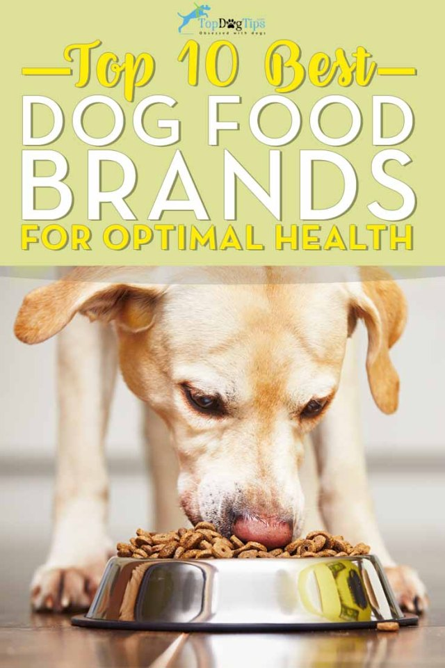 Top 10 Dog Foods - What is the Best Dog Food Brand for Health