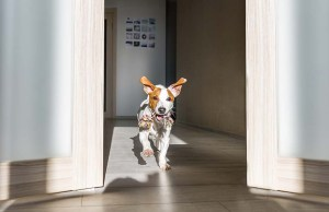 Top 12 Unique Ways to Tire Out a Hyperactive Dog