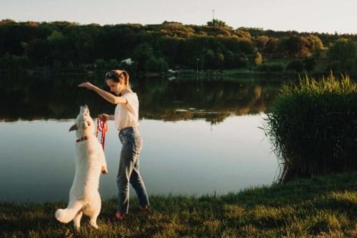 Train Dogs to Do Doggy Push-ups