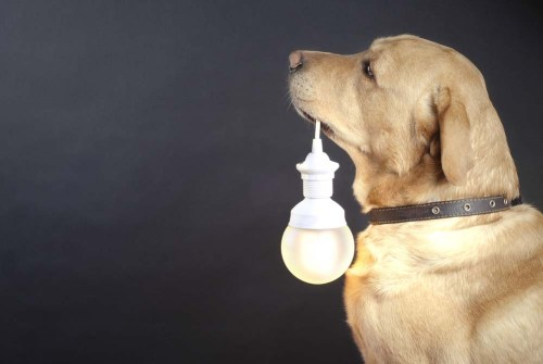 Use Light Activated Dog Toys