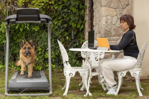 Use a Treadmill for Dogs