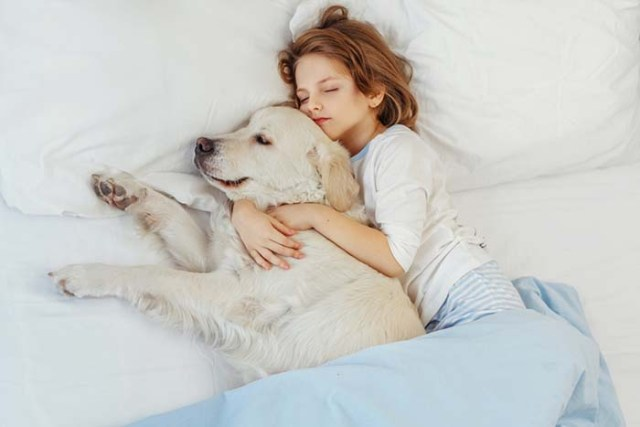 You cannot sleep well without your dog