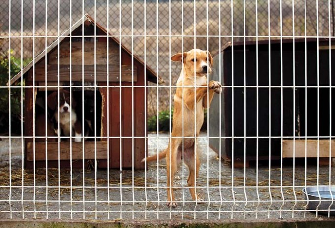 13 Reasons Why Dogs End Up in Shelters