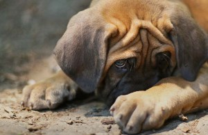 15 Most Common Dog Myths Debunked