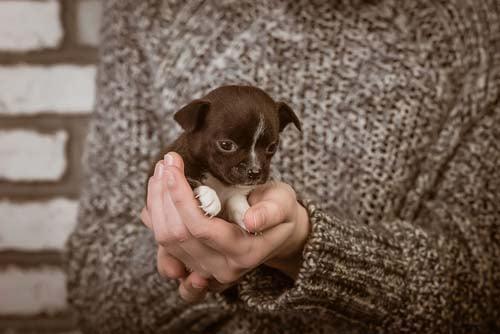 15 New Puppy Checklist To-Dos