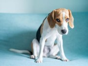 7 Situations That May Stress Out Your Dogs