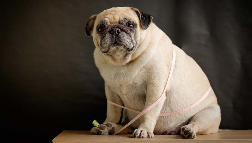 7 Unexpected Ways You Could Be Harming Your Dog