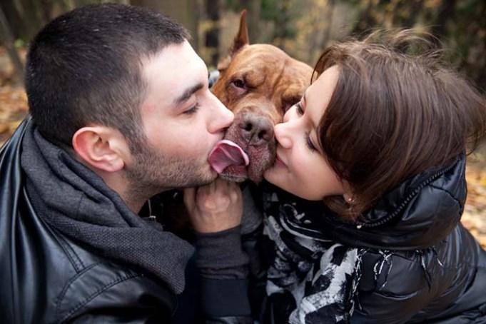 Do Loving Dogs Still Feel Jealousy - Science Says Yes