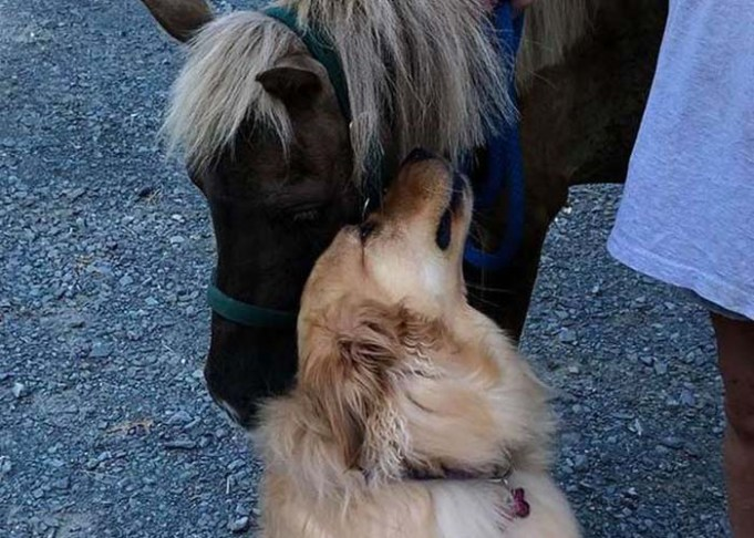 Friendly Golden Retriever Becomes BFFs with Neglected Mini-Horse