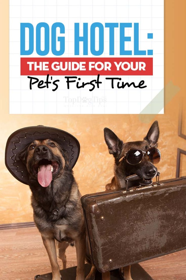 Hotel for Dogs Guide