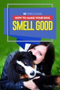 How to Make a Dog Smell Good - A Video Guide