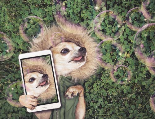 Know What Makes Your Dog Stand Out on Instagram