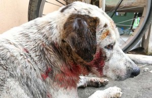 My Dog Was Bit - 5 Things You Should Do Immediately
