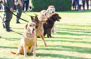 New Jersey Bill Plans to License Dog Trainers