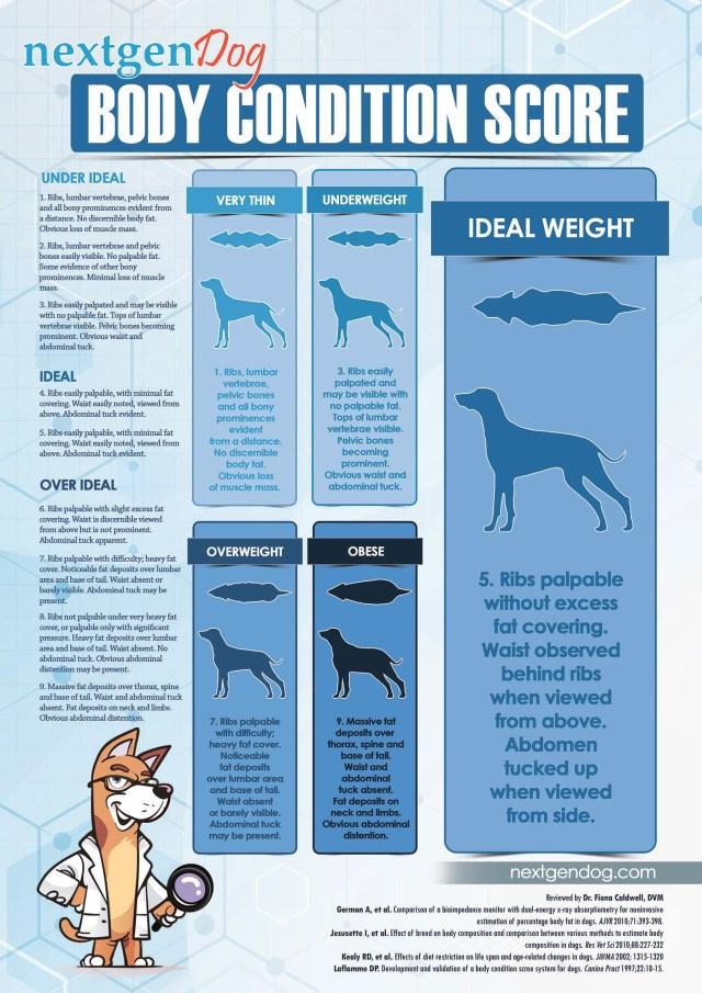 Dog Body Condition Score Chart (BCS)
