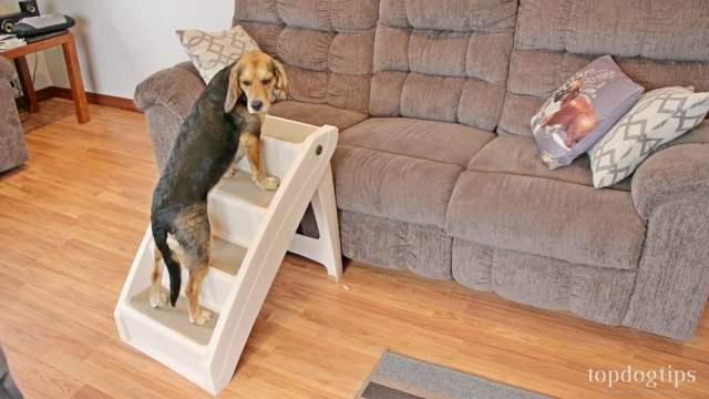 PetSafe Solvit PupSTEP Plus Pet Stairs Review
