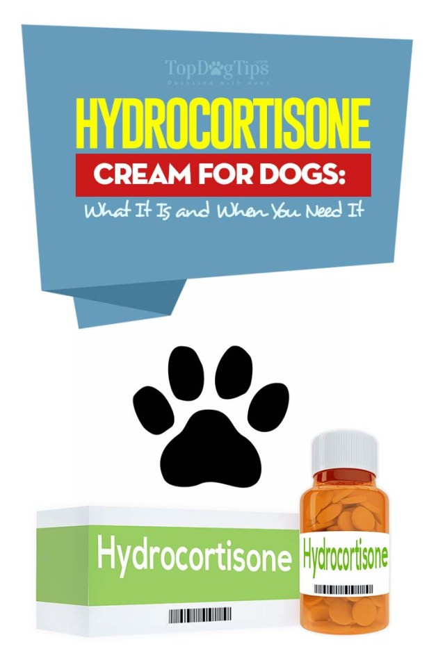 Science-based Guide on Hydrocortisone Cream for Dogs