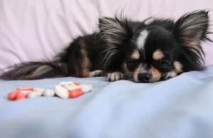The Role of Zinc for Dogs - What Pet Owners Don't Know