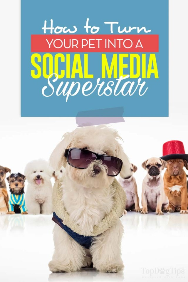 Tips on How to Make Your Dog Famous on Instagram