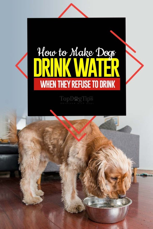 Tips on How to Make a Dog Drink Water