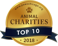 Top 10 Animal Charities - PAWS Chicago