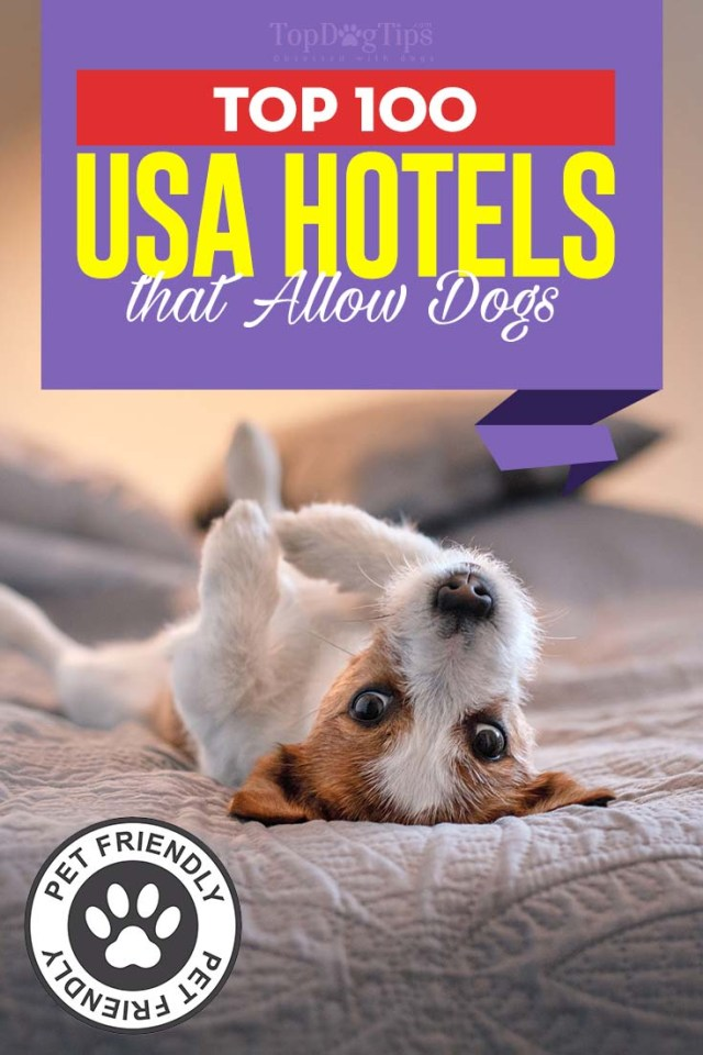 Top 100 Hotels that Allow Dogs in the USA