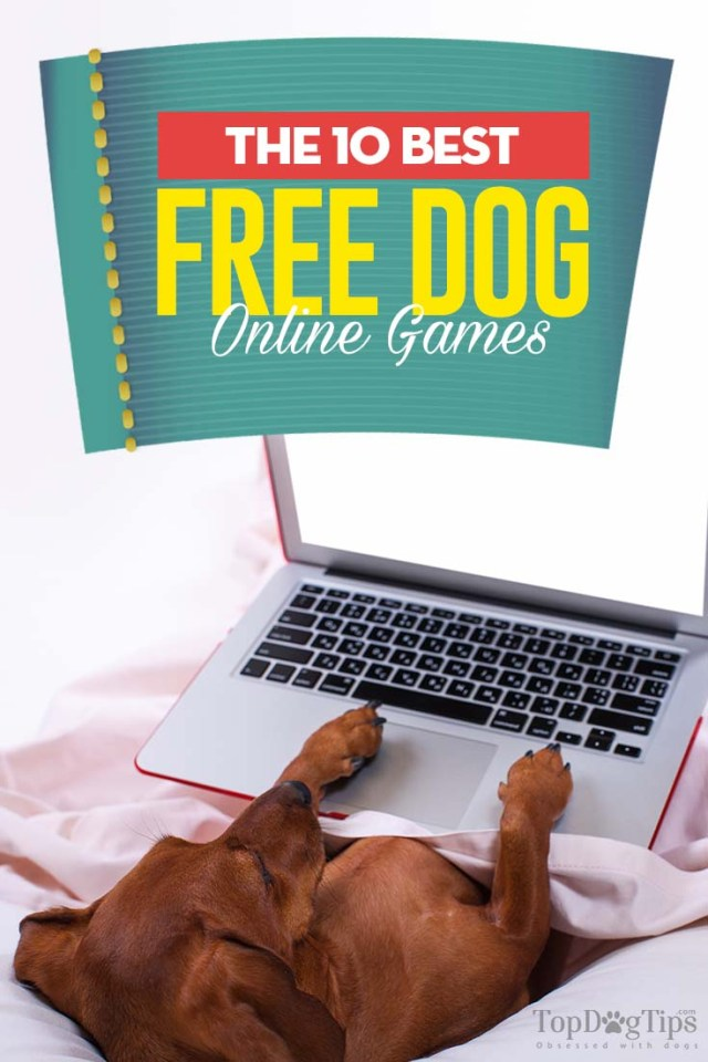 10 Most Addictive Free Dog Games Online to Play Right Now