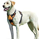 Eagloo Harness with Front Clip