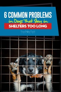 6 Common Problems in Dogs That Stay in Shelters