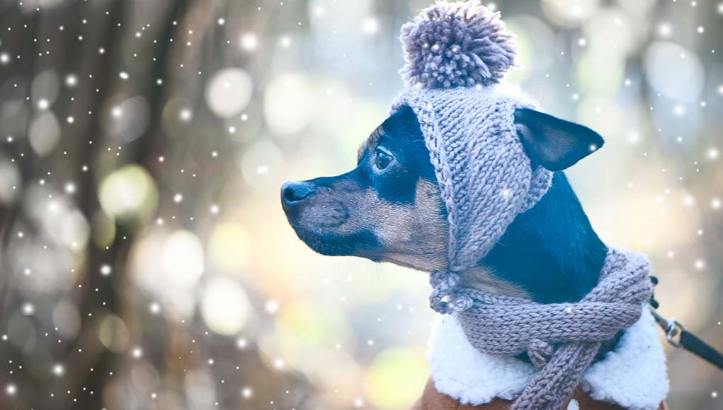 7 Essential Winter Dog Products to Start Shopping for Right Now