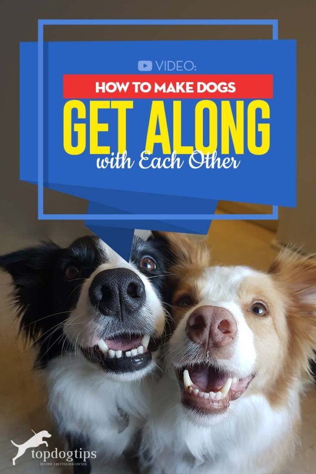 Best Tips on How to Make Dogs Get Along and Love Each Other