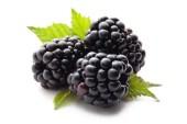 Blackberries for dogs