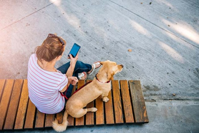 Failure to give your dog attention is causing distress