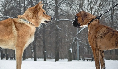 Introduction between two dogs