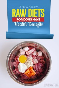 Raw Diets for Dogs Have Health Benefits - New Study Finds