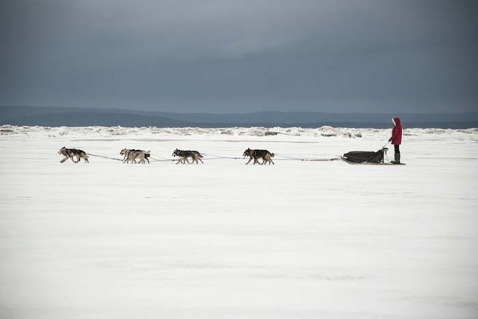 Sled Dogs in Greenland are Becoming Extinct, Report Says