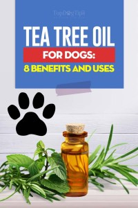 Tea Tree Oil for Dogs - Benefits and Uses Based on Science