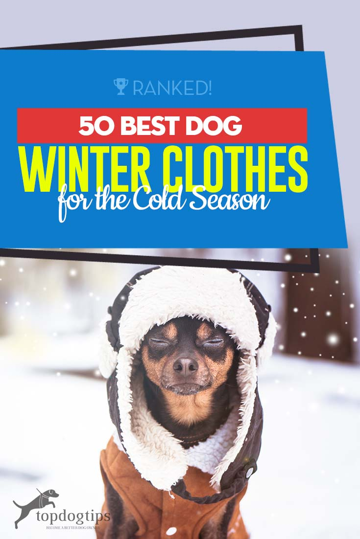 The 50 Best Dog Winter Clothes That You Need for This Season