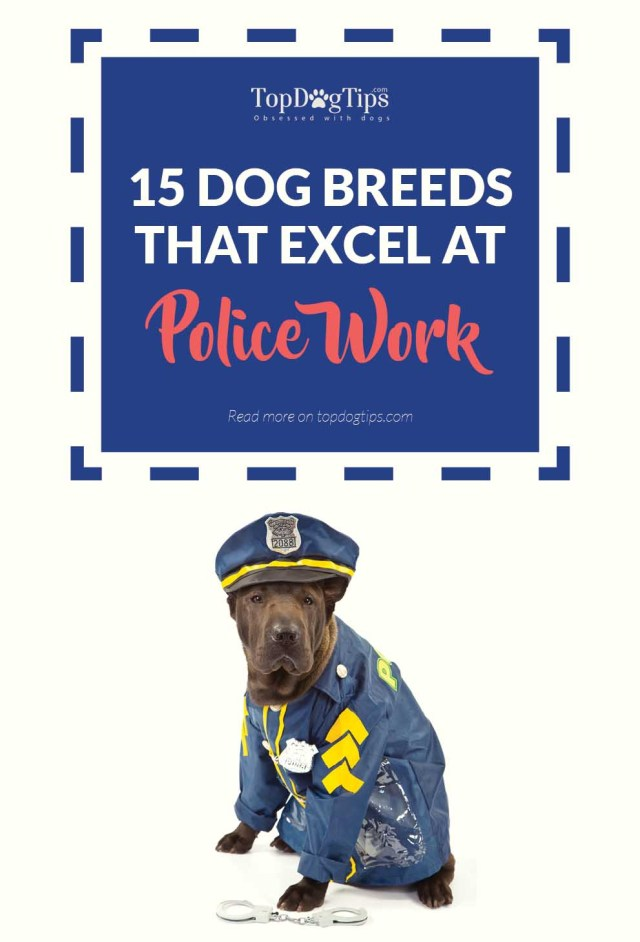 The Most Popular Police Dog Breeds