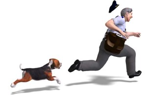 Why Do Dogs Bark at the Mailman - Here's the Answer