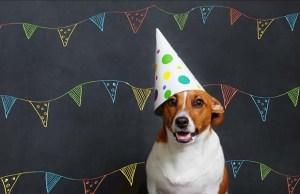 7 Dog Birthday Ideas