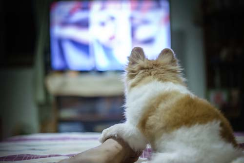 Dog TV for Bored Dogs