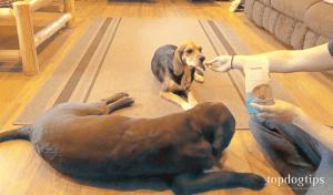 Can dog treats improve your dog's health?