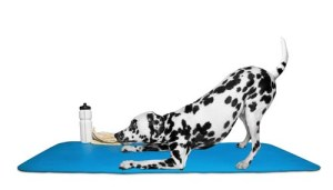 How to Prevent Muscle Straining in Your Dog