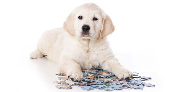 Invest in Interactive Puzzles for Dogs with Boredom