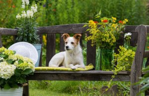 Plants Toxic to Dogs and Plants Safe for Dogs - The ULTIMATE List