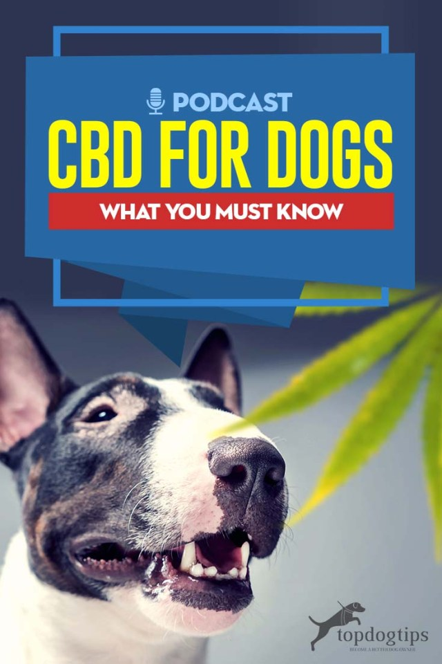 Podcast - CBD for Dogs - What You Must Know