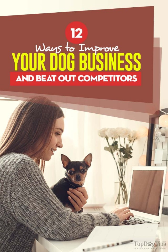The 12 Ways to Improve Your Dog Business and Beat Out Competitors
