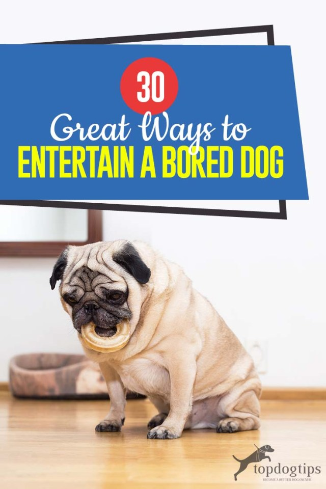 The 30 Ways to Entertain a Bored Dog