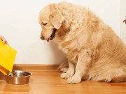 The 411 On Functional Ingredients in Dog Food